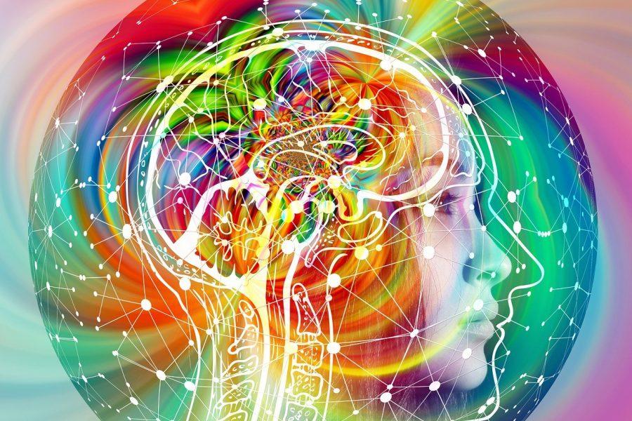 Brain 4490836 1920