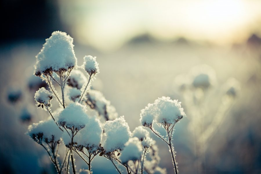 Snowflake N55-5Mu1Zvk