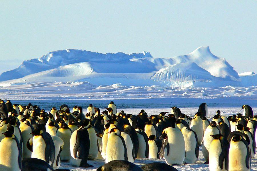 Emperor penguins 429127 1920